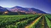 Multispectral VHR Imagery Supports Crop Management in Vineyards