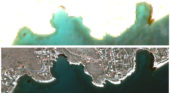 Greece: Satellite images show oil spill